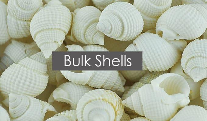 Bulk Sea Shells