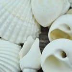 mixed medium shells