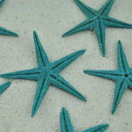 turquoise baby starfish