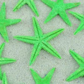 lime green baby starfish