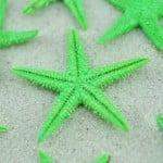 lime green baby starfish