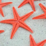 red baby starfish