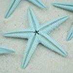 sky blue baby starfish