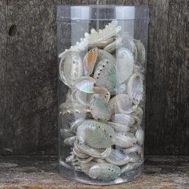 cylinder-T-pearl-haliotis-rufescens