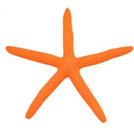 orange finger starfish