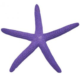 purple finger starfish