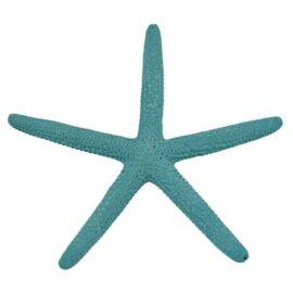 turquoise finger starfish