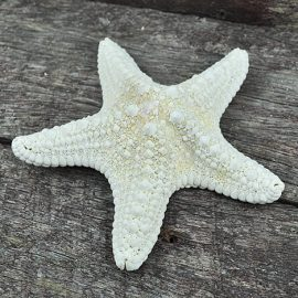 white jungle starfish
