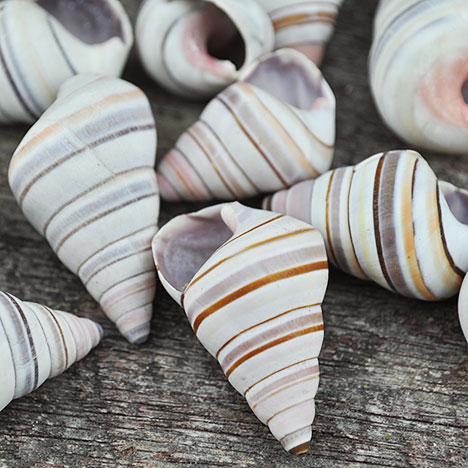 candy land snails