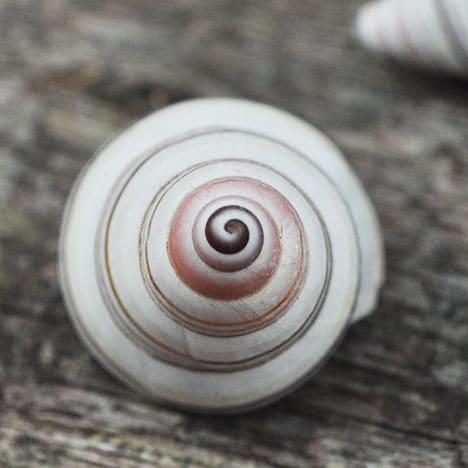 candy land snail