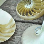 pearled nautilus shell tri cut