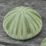 sea-urchin-green