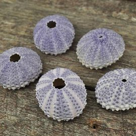 sea-urchin-purple