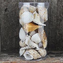 Shell Gift Packs