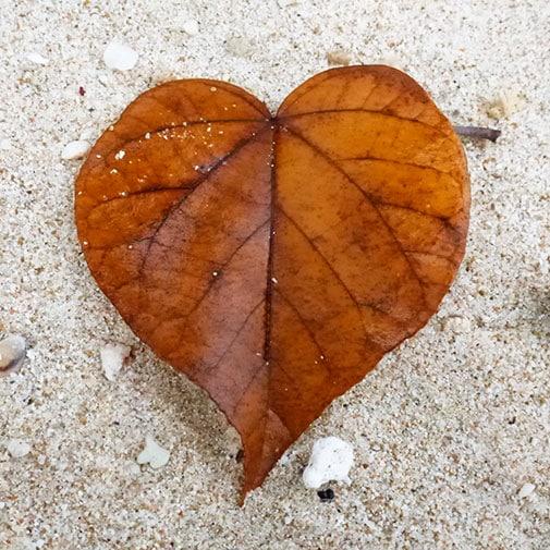 heart-leaf-505