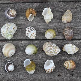 Small Hermit Crab shells