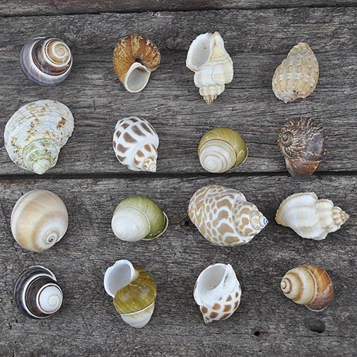 Small Hermit Crab shells