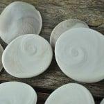 Large Turbo mushroom catseye shell