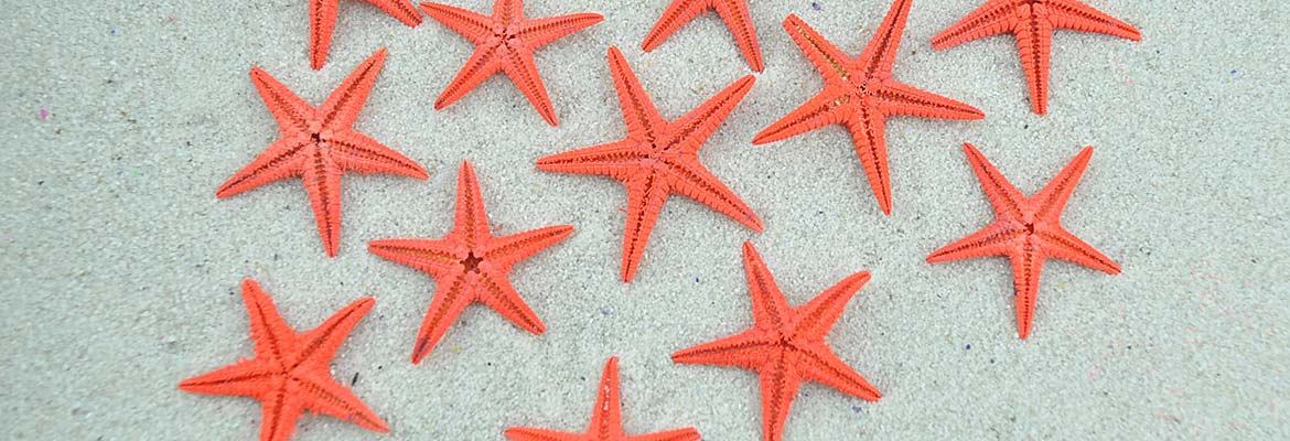 Red Baby Starfish