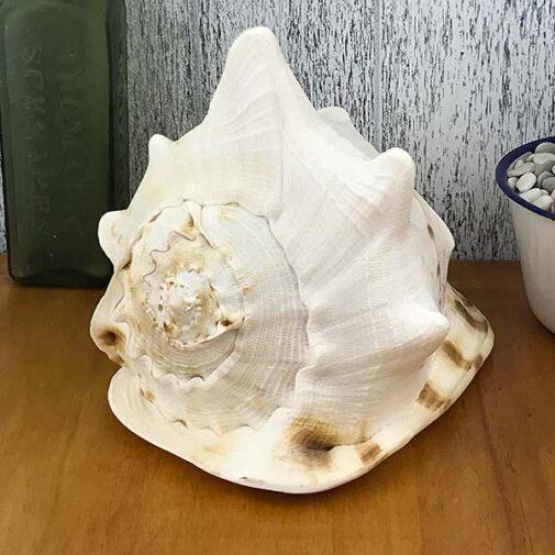 Giant Helmet shell