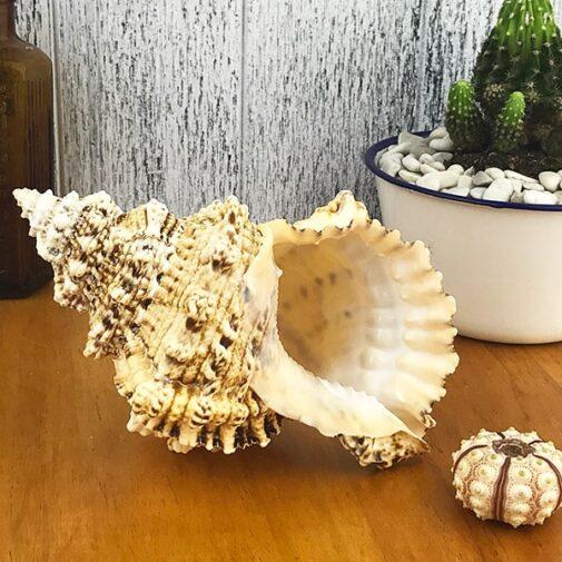 Bursa Bubo shell