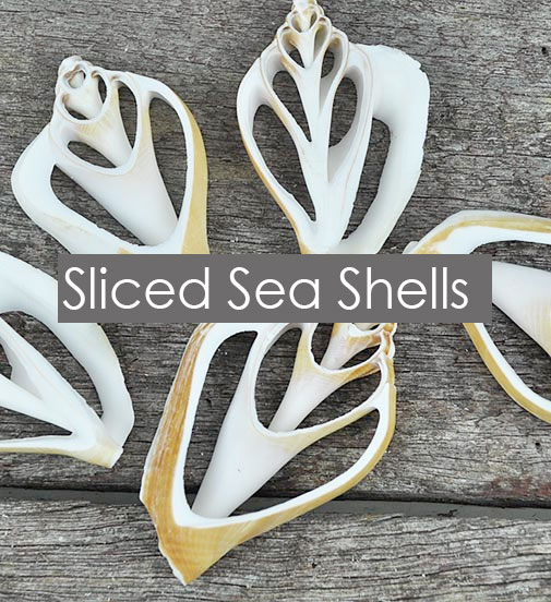Sliced Sea Shells