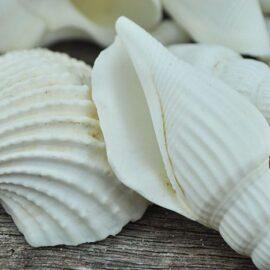 mixed large shells
