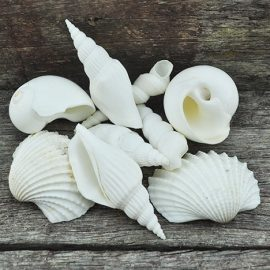 mixed large shells
