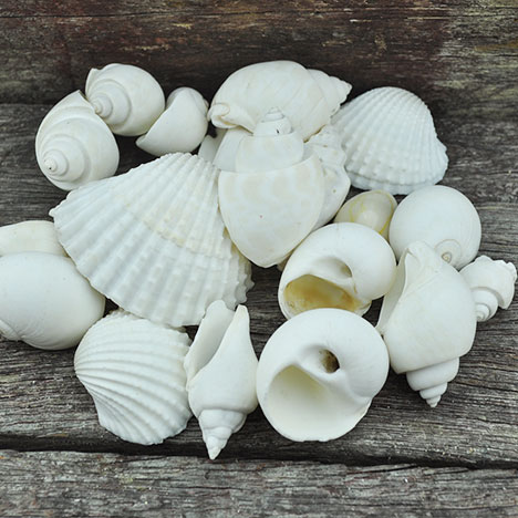 mixed medium shells