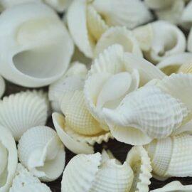 mixed small shells