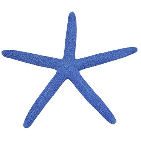 royal blue finger starfish