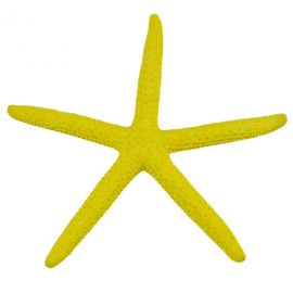 yellow finger starfish