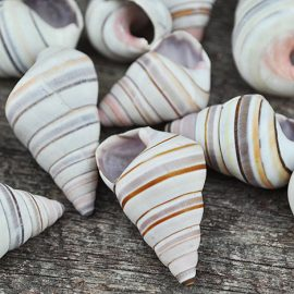 candy land snails