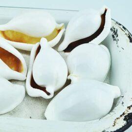 ovula ovum shell