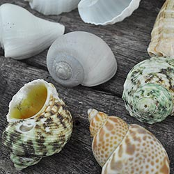 Hermit Crab Shells