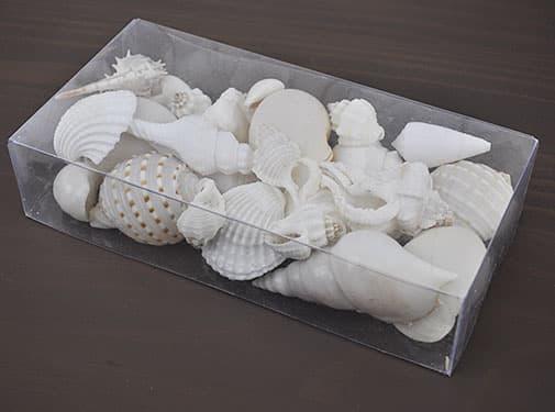 Clear box white shells