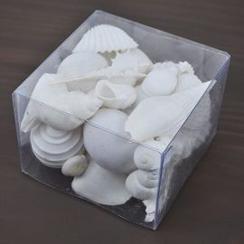 Clear box white shells
