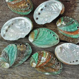Japanese Abalone shells jade with red