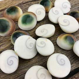 Green and gold catseye shells