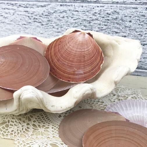 Sun and Moon scallop shells