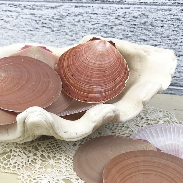 Sun and Moon scallop shells