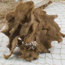 Natural Medium Sea Sponge
