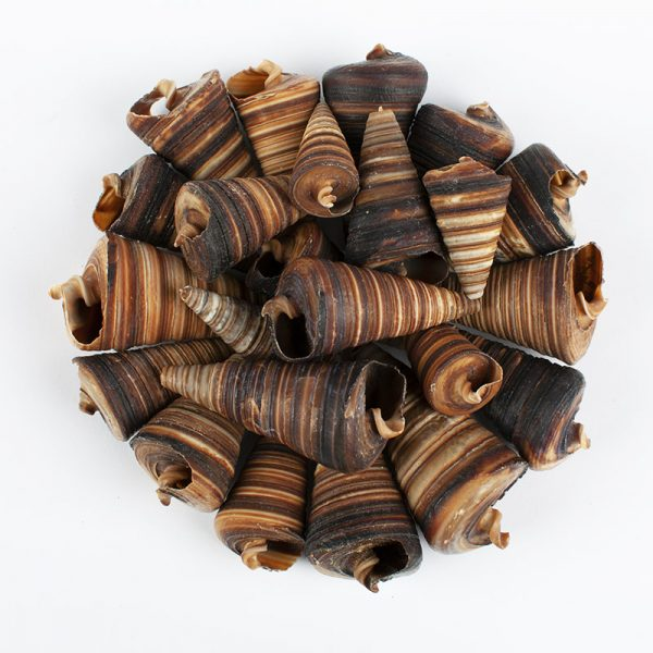 Telescopium horn shells