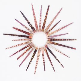 Tiger Urchin Spines