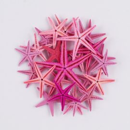 Flat Starfish Pink colours