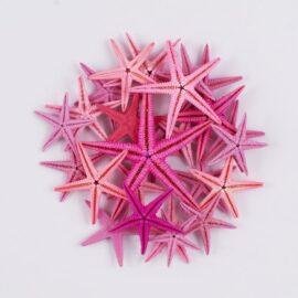 Flat Starfish Pink colours