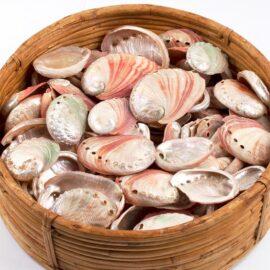 Haliotis (Abalone) rufescens semi-pearled shells
