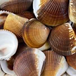 Brown Cockles