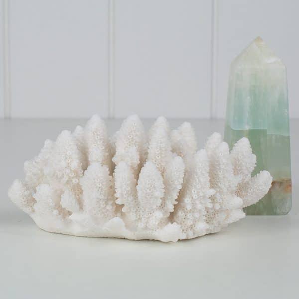 Acropora Coral Specimen CECPL2-1-5