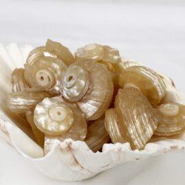 Angaria Delphinus Pearled shells